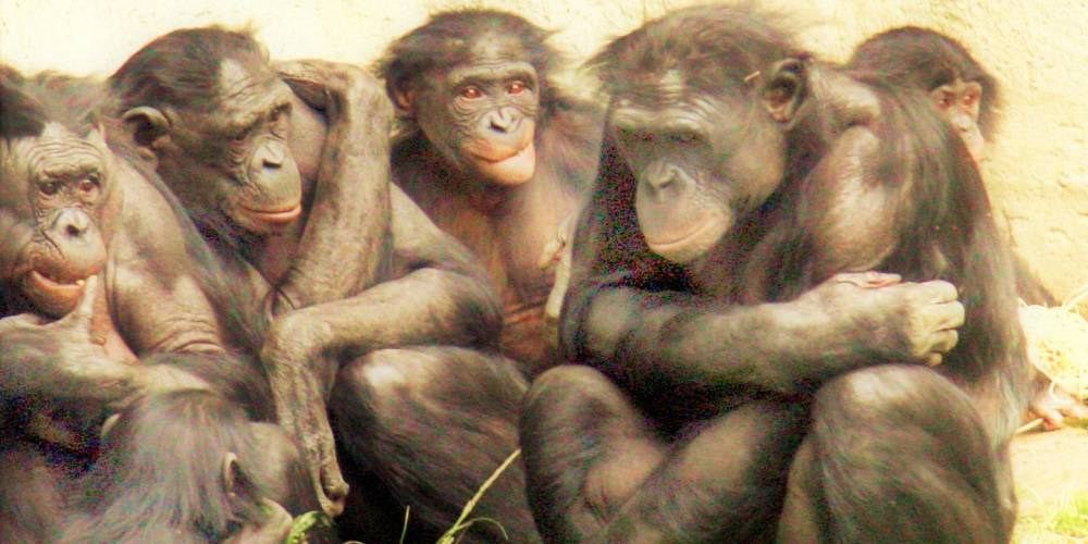 Homosexualita zvierat, LGBT komunity v ríši fauny